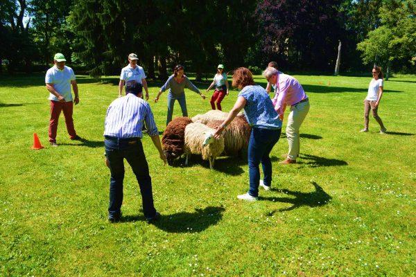 workshop-schapendrijven-events-company-1