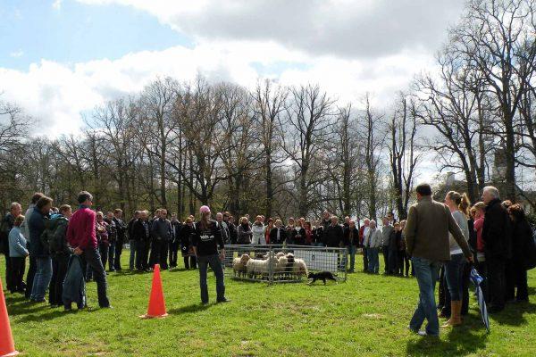 workshop-schapendrijven-events-company-2