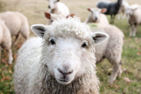 workshop-schapendrijven-events-company-4